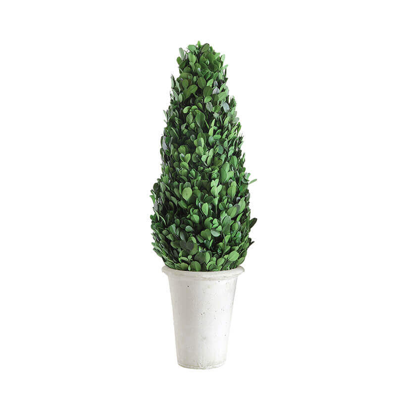 Ron Deco Plant