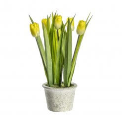Potted Tulips Yellow