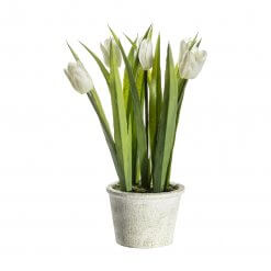 Potted Tulips White