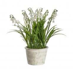 Potted Lily of the Valley Large