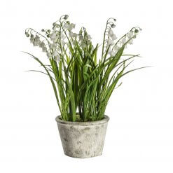 Potted Lily of the Valley Small