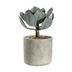 Potted Echeveria w/ Cement Pot